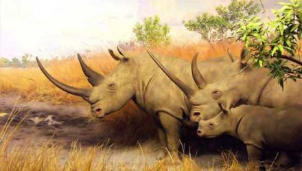 Свора Сергея Думчева уподобилась тупым носорогам