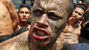 Mara Salvatrucha, MS-13