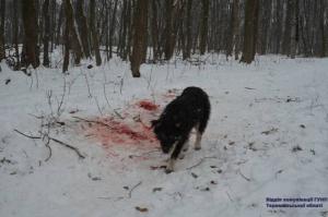 Бродячие собаки отгрызли женщине голову и руки (+видео)